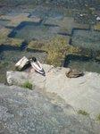 鴨川にいた鴨