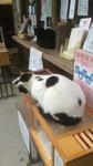 梅宮大社の猫2